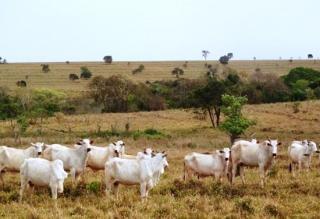 São Carlos: Fazenda pecuária no  município de Bandeirantes - MS  (6118) 1