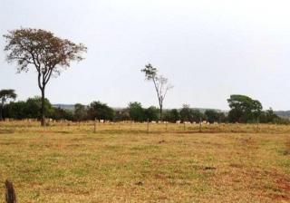 São Carlos: Fazenda pecuária no  município de Bandeirantes - MS  (6118) 3