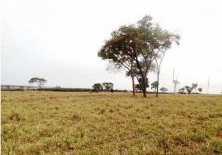 São Carlos: Fazenda pecuária no  município de Bandeirantes - MS  (6118) 4