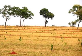 São Carlos: Fazenda pecuária no  município de Bandeirantes - MS  (6118) 5
