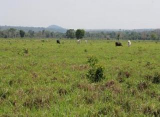 São Carlos: Fazenda Pecuária - Conceição do Araguaia - PA (6137) 3