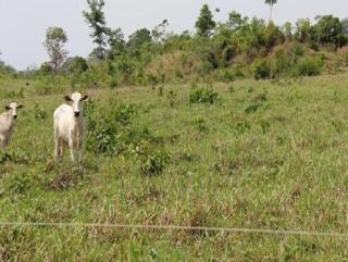 São Carlos: Fazenda Pecuária - Conceição do Araguaia - PA (6137) 5