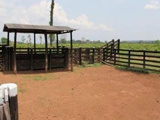 São Carlos: Fazenda Pecuária - Conceição do Araguaia - PA (6137) 6