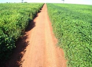 São Carlos: Fazenda Pecuária em Estrela do Norte - GO (6143) 1
