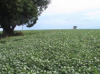 São Carlos: Fazenda Pecuária em Estrela do Norte - GO (6143) 2
