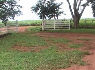 São Carlos: Fazenda Pecuária em Estrela do Norte - GO (6143) 5