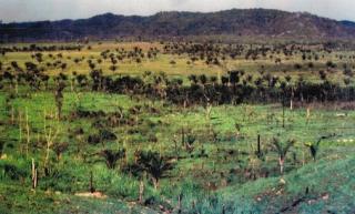 São Carlos: Fazenda Pecuária na região de Vila Rica - MT (6141) 2