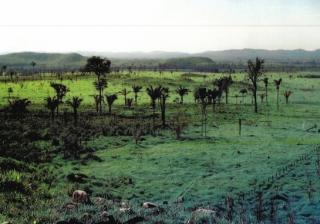 São Carlos: Fazenda Pecuária na região de Vila Rica - MT (6141) 3