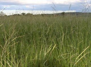 São Carlos: Fazenda em Mato Grosso - Alto Araguaia  (6139) 1