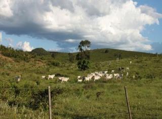 São Carlos: Fazenda em Mato Grosso - Alto Araguaia  (6139) 3