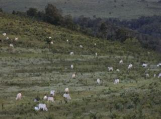 São Carlos: Fazenda em Mato Grosso - Alto Araguaia  (6139) 4