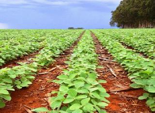 São Carlos: Fazenda Agrícola  situada em Querência - MT (6144) 7