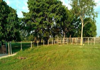 São Carlos: Fazenda Pecuária - Município  de Dois Irmãos - TO (6146) 5