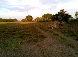São Carlos: Fazenda Pecuária - Município  de Dois Irmãos - TO (6146) 6
