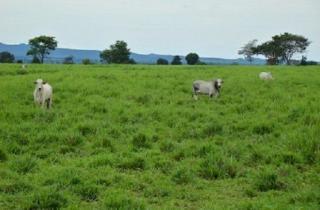 São Carlos: Fazenda Pecuária em Flores de Goiás - GO (6153) 1