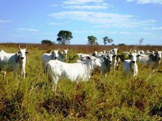 São Carlos: Fazenda Pecuária em Flores de Goiás - GO (6153) 4