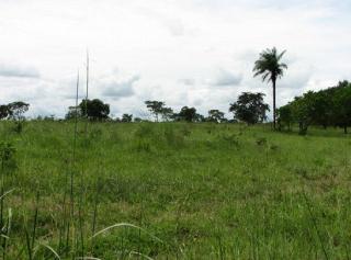 São Carlos: Fazenda de dupla aptidão em Canarana - MT (6155) 2