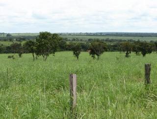 São Carlos: Fazenda de dupla aptidão em Canarana - MT (6155) 3