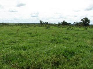 São Carlos: Fazenda de dupla aptidão em Canarana - MT (6155) 5