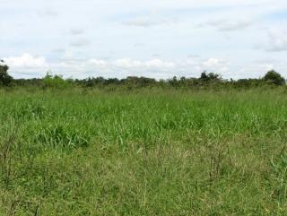 São Carlos: Fazenda de dupla aptidão em Canarana - MT (6155) 6