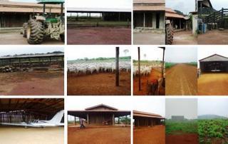 São Carlos: Fazenda pecuária - São Felix do Xingu - PA (6160) 1