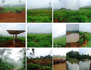 São Carlos: Fazenda pecuária - São Felix do Xingu - PA (6160) 2