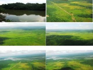 São Carlos: Fazenda pecuária - São Felix do Xingu - PA (6160) 3