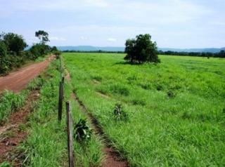 São Carlos: Fazenda com 1425 há - Porto Nacional - TO (6165) 2