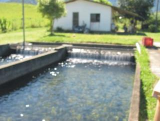 Cachoeiras de Macacu: Oportunidade em Silva Jardim 4