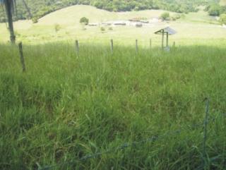 Cachoeiras de Macacu: Léo Imóveis  fazenda 30 hectares 7