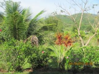 Cachoeiras de Macacu: Chácara em Guapimirim muito barato  7