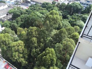 Santo André: Apartamento Amistá Bosque e Lazer em São Bernardo do Campo - Planalto  3