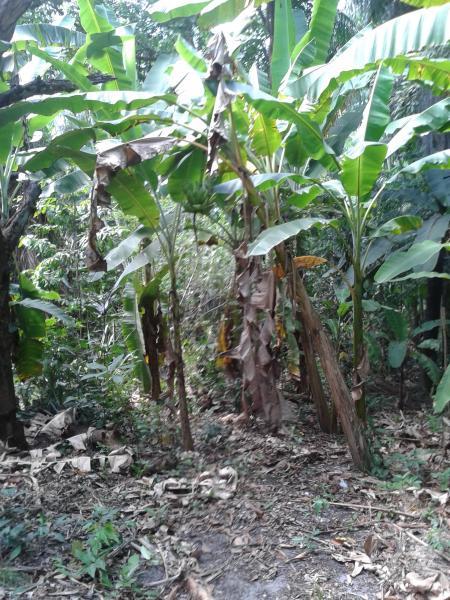 São Luis: Sítio no povoado Santa Luzia em Rosário MA 3