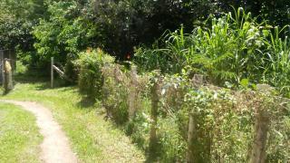 Lote de 1250 m2 na BR 415, Vila Cachoeira