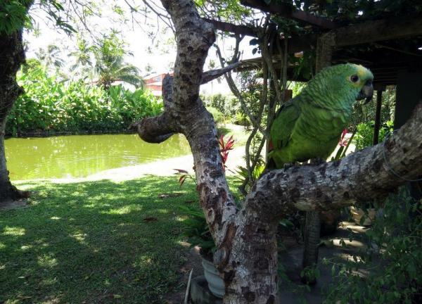 São Paulo: Resort Pousada Alto Padrão na Ilha da Itaparica 13