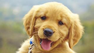 Pet Shop em Santo André. R$ 65.000,00
