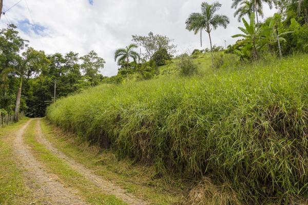 São Paulo: Terrenos Panoramicos em Paraty com 20.000 m² 1