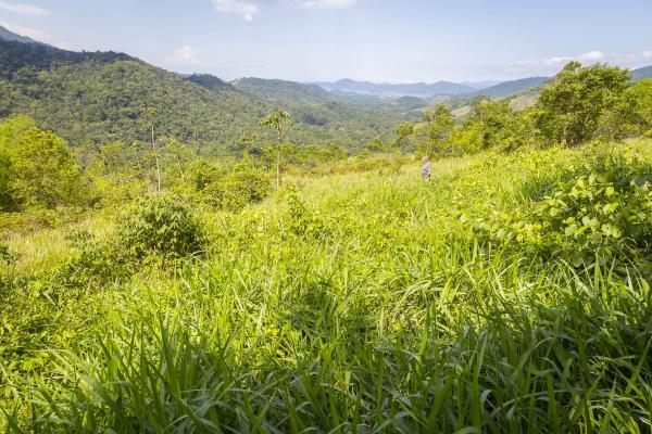 São Paulo: Terrenos Panoramicos em Paraty com 20.000 m² 6