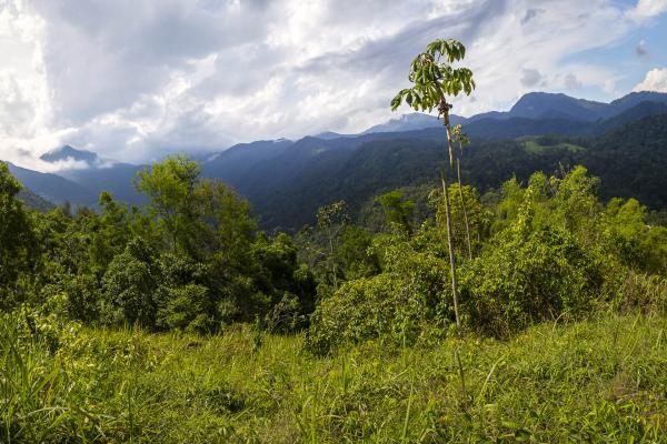 São Paulo: Terrenos Panoramicos em Paraty com 20.000 m² 7