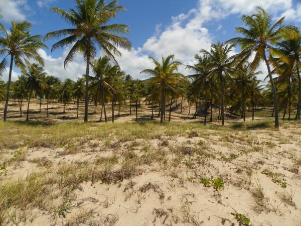 São Paulo: Grande Área com 177 ha e 733 m linha mar em Jandaíra 12