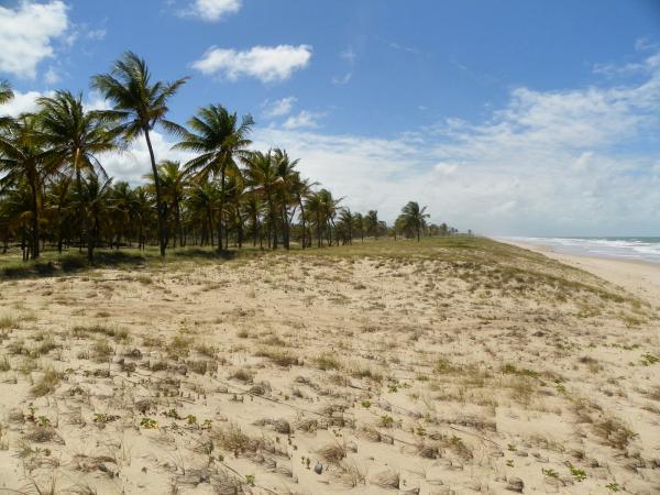 São Paulo: Grande Área com 177 ha e 733 m linha mar em Jandaíra 14