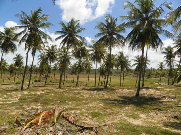 São Paulo: Grande Área com 177 ha e 733 m linha mar em Jandaíra 21