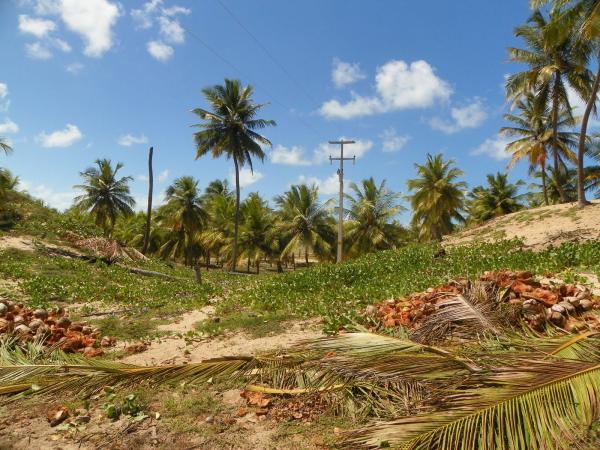 São Paulo: Grande Área com 177 ha e 733 m linha mar em Jandaíra 3