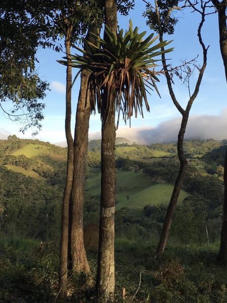 São Paulo: Excelente fazenda orgânica em cenário de montanha 5