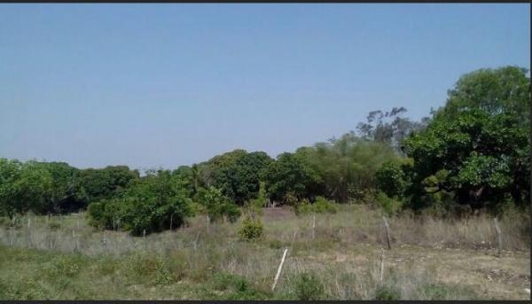 São Paulo: Fazenda com 3138 alqueires em Novo Acordo, Tocantins 11