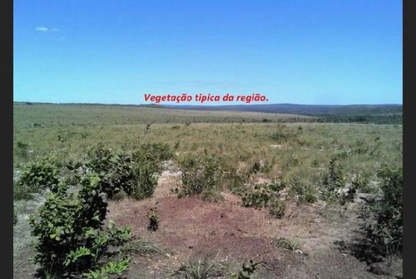 São Paulo: Fazenda com 3138 alqueires em Novo Acordo, Tocantins 5