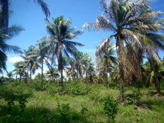 Fortaleza: Fazenda 284 ha com frente para CE040 e Estrada de Itapeim 11