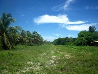 Fortaleza: Fazenda 284 ha com frente para CE040 e Estrada de Itapeim 7
