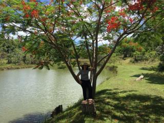 São Paulo: Sitio Excelente a um terreno enorme de 50500 m2 6