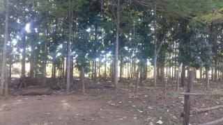 Itumbiara: VENDO CHACARÁ EM VICENTINÓPOLIS GOIAS 5